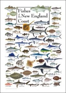 New_England_Coast
